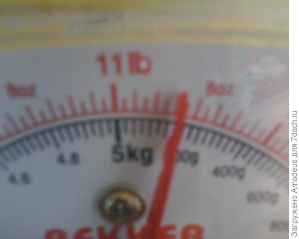 общий их вес составил