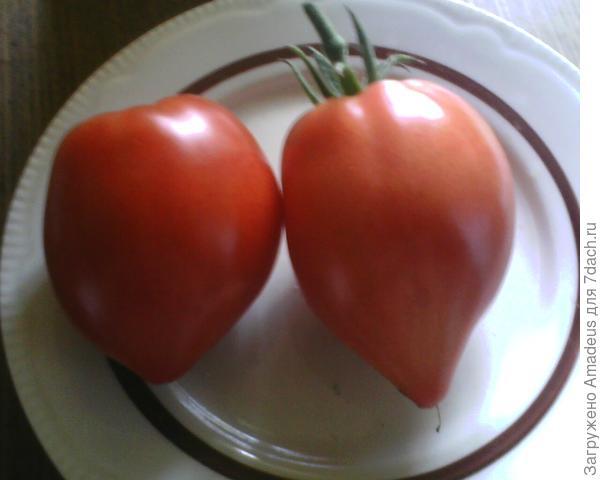Два плода сняла