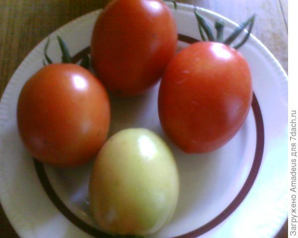 4 плода сняла.
