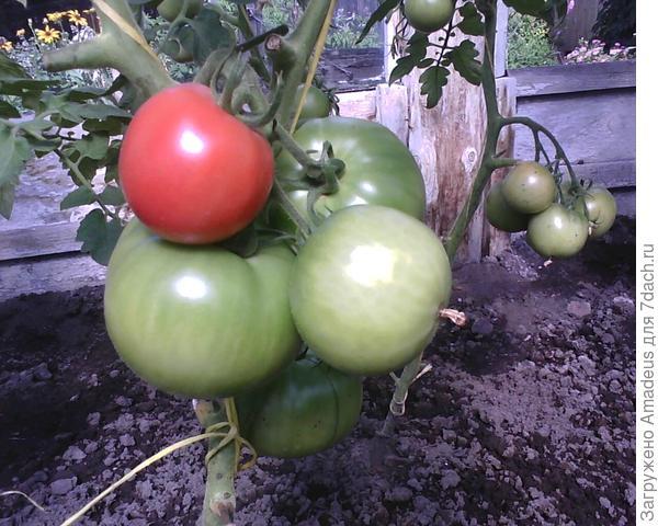 4 плода