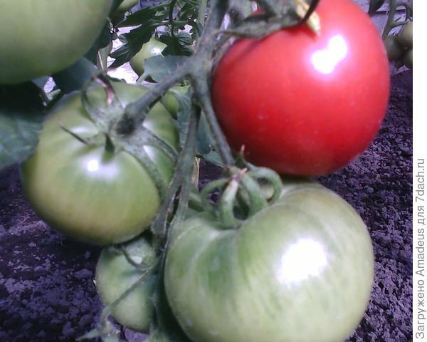 В кисти 4 плода