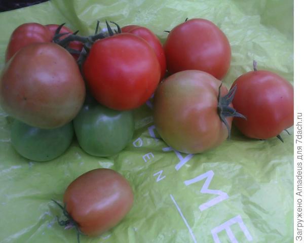 10 плодов снято