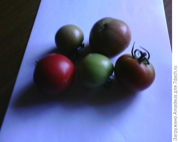 Вот эти плоды