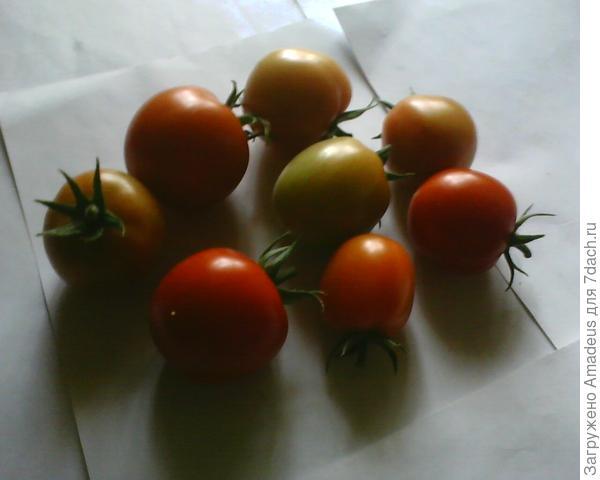Сняла 8 плодов разной спелости