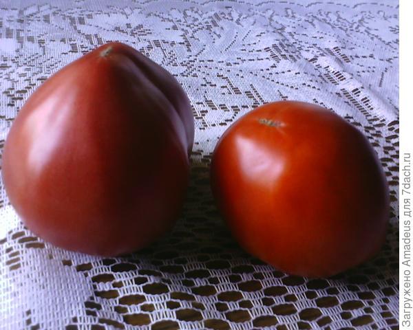 левый томат розового цвета с носиком - от двух кустов , а правый - от первого куста