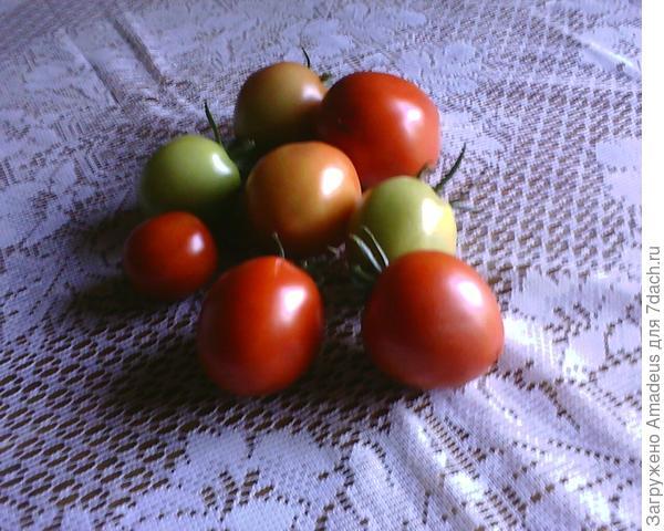 снято 8 штук плодов