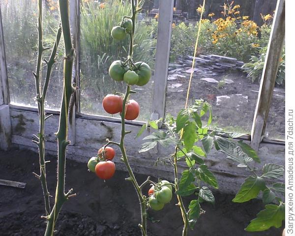 от посева в почву