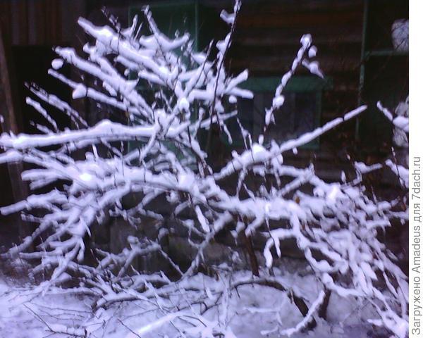 За окном зима ...