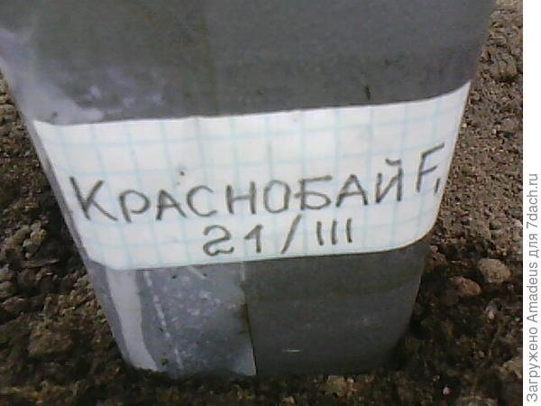Проверяю надписи на горшочках с рассадой