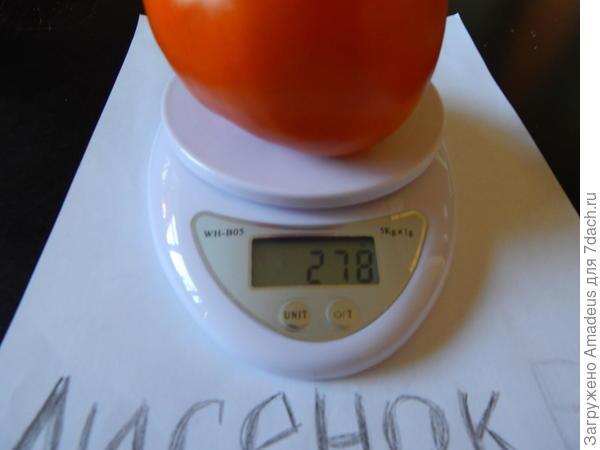 1 томат весом 279 г