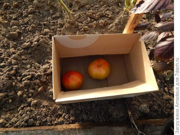 Срезанные первые плоды