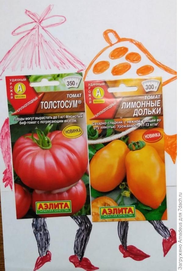 "Томат 'Толстосум' от ООО ""Аэлита"". Итоги"