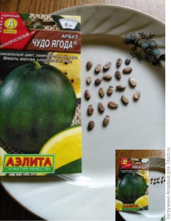 Медовые дольки арбуза 'Чудо ягода' от агрофирмы Аэлита. А так ли это? Итоги