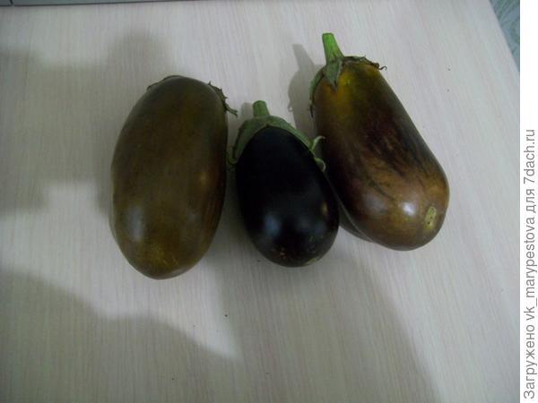 Почему позеленели спелые баклажаны?