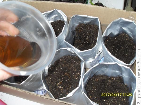 Рассаду поместила в коробку, дно которой выстелила пленкой для задержания воды, которую будут отдавать емкости через дренажные отверстия после полива.