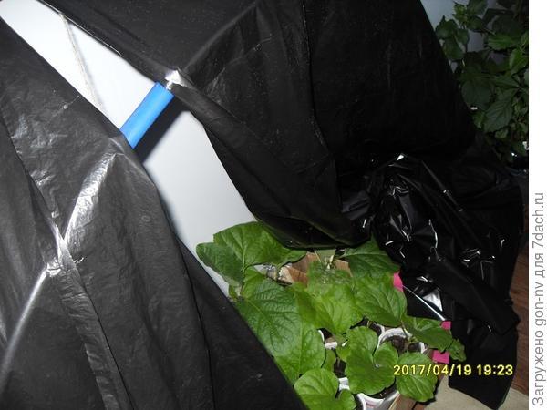 с 18.00-8.00 помещался на специальное приспособление: ящик с дугами, стоящий на полу лоджии, который накрывался черной пленкой, для создания эффекта короткого светового дня.