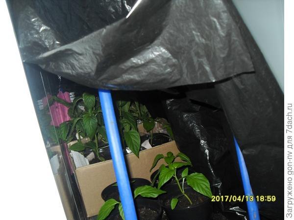 с 18.00-8.00 помещался на специальное приспособление: ящик с дугами, стоящий на полу лоджии, который накрывается черной пленкой, для создания эффекта короткого светового дня.