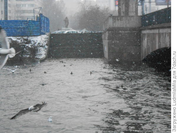 Чайки на реке.Идет снег.