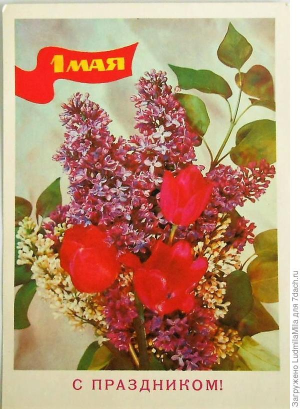 Вот с такими цветами встречают Первомай южане.