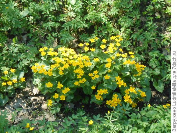 Желтое солнышко в траве