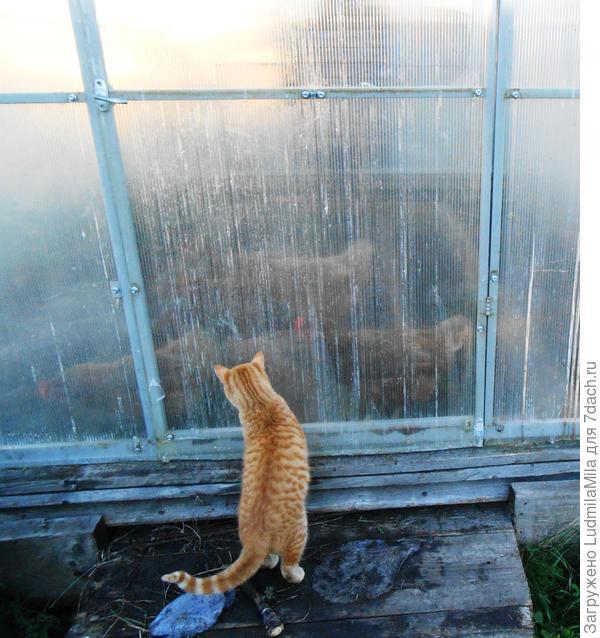 Эх, жалко что дверь закрыта! Уж я бы поиграл (соседи переселили курочек на зиму в теплицу)!