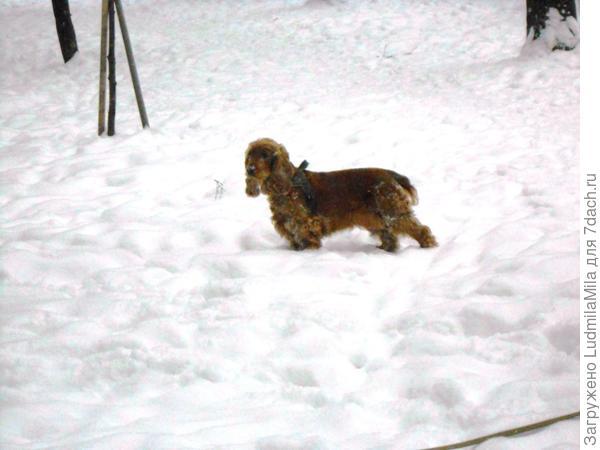 Что туда идти не надо? Утону в снегу по самые уши?