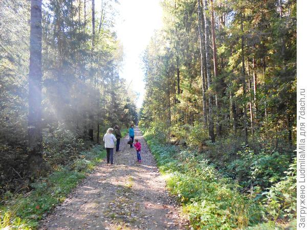 Пока по тропинке в лес густой
