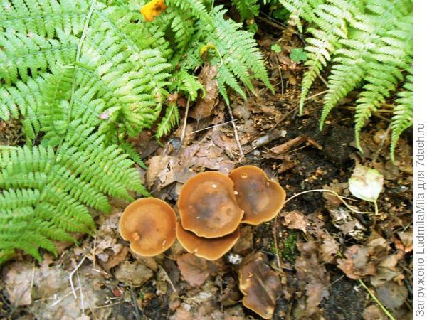 Такие грибы растут везде