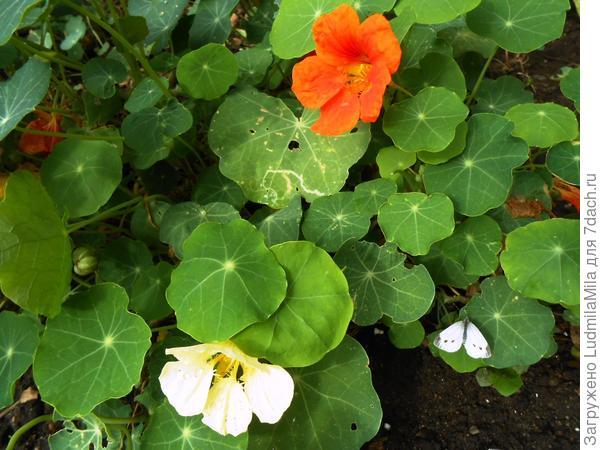 Цветы и последняя бабочка
