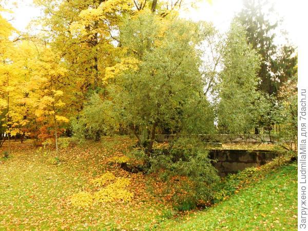 Старинные мостики в зелени