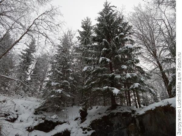 Вокруг дикий лес