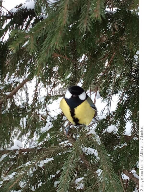 Птицы позируют