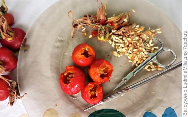 Варенье из шиповника с грецкими орехами. Пошаговый рецепт с фото