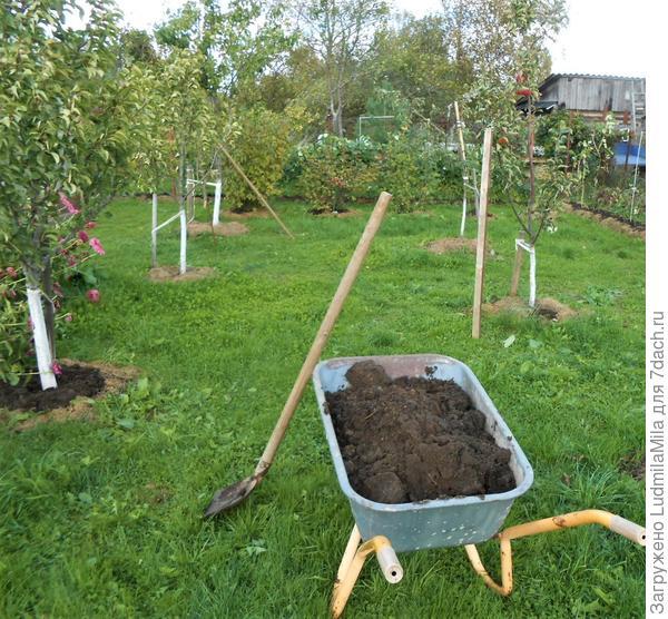 Как мы готовим сад к зиме