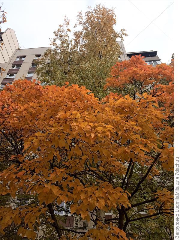 Осень вступила в свои права