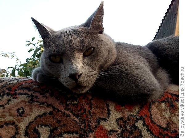 А уж как кот Витас старался - видели все...