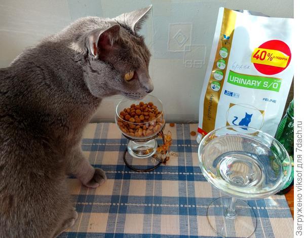 А вот и второй завтрак готов - так, праздник ЖЕ!