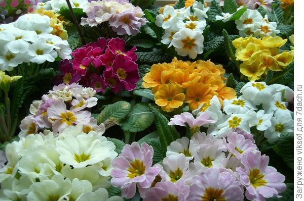 Оленька, поздравляю с праздником Весны! Здоровья тебе и удачи!