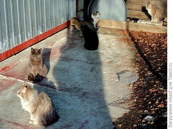 Один Витас на солнышке, а второй в тени или он чёрный?