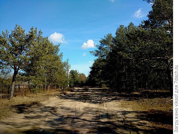 Справа начинается прекрасный сосновый бор, а впереди за поворотом наш дачный кооператив. Снимок сделала в пятницу - была весна, а вчера и сегодня - ветер, дождь со снегом ...
