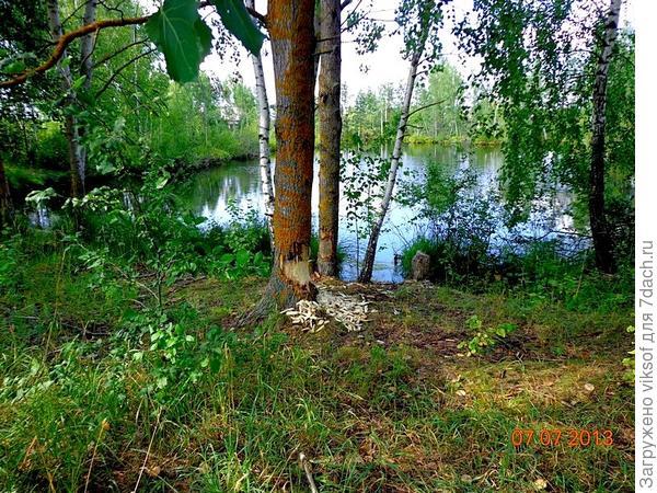 Лесное озеро рядышком с нашим кооперативом