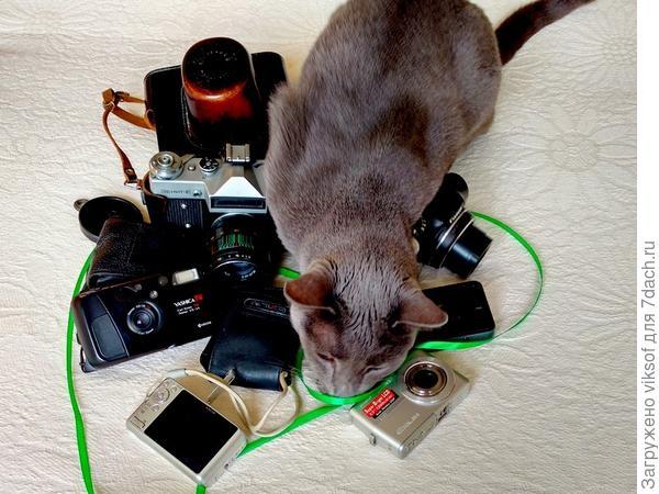 Почесала бы, но он очень занят - готовится на дачу, выбирает себе фотоаппарат...