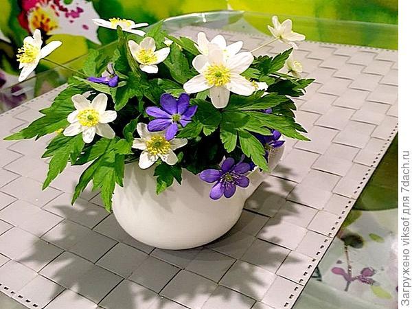А эти на столик тебе - чай будешь пить т посмотри, скоро, очень скоро придёт и к вам Весна!