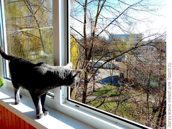 Витас у открытого окна на балконе - Весна не за горами!