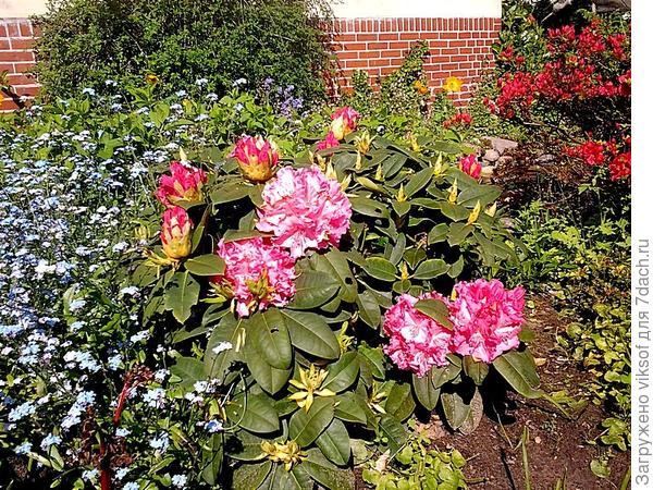 Весенние краски в саду Лиди...