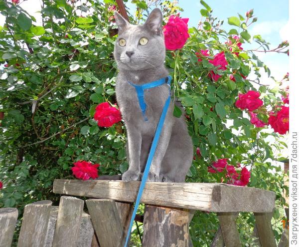 """Я - говорящий кот Витас - Добро пожаловать!, а кошечка у тебя есть? Бери с собою! Здесь нас любят!"""""""