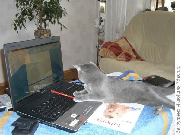 У нас даже коты на сайте залёживаются!