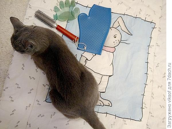Даже коврик и все принадлежности всегда к услугам нашего кота и никогда не убираются