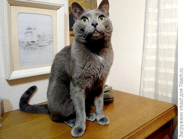 некоторые считают кошачьи глаза ничего не говорящими - они просто не видят, а может кошки не на всех одинаково смотрят