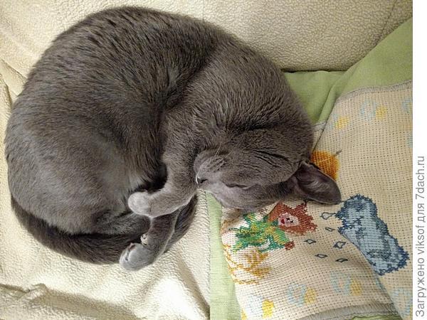 гляжу на безмятежно спящего Витаса и на душе так спокойно